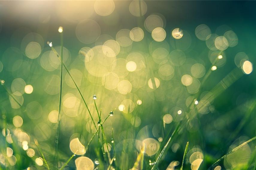 草と露の写真